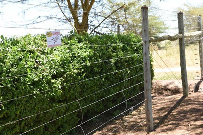 arn security electric fence 2019